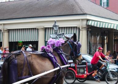 02 horse on decatur