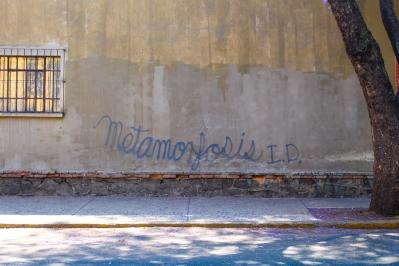 07 metamorfosis tag mexico city