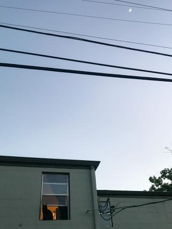 34 cat in window + moon lafitte greenway new orleans