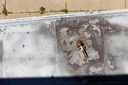 28 steubenville dead barbie
