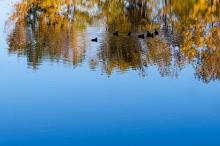 05 blaine minnesota ducks