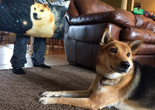 06 ollie & doge pillow