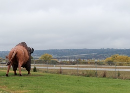 17 south dakota rest stop buffalo