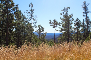 65 black hills south dakota