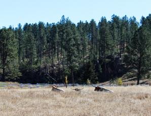 68 south dakota longhorns