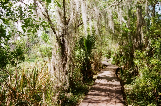 bayou coquille path new orleans 35mm