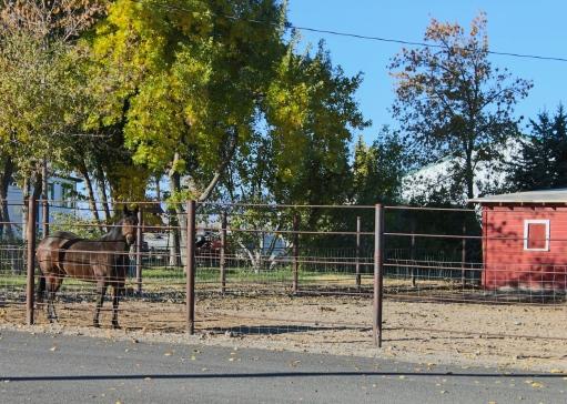 40 powell wyoming yard horse