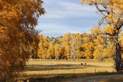 09 montana roadside