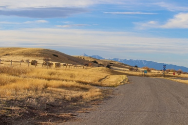 15 montana view