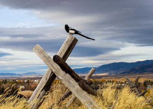 19 bozeman montana bird
