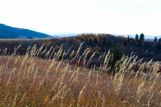26 bozeman montana triple tree hike