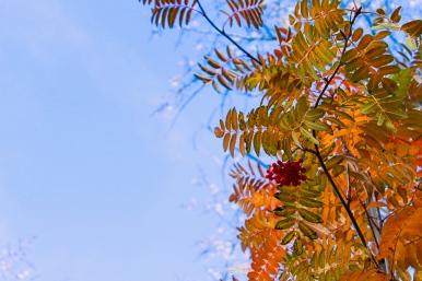 27 bozeman montana triple tree hike leaves