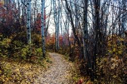 34 bozeman montana triple tree hike