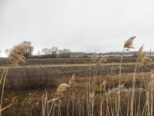 48b montana field