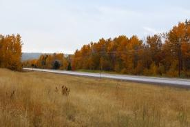 02 road to bison range montana