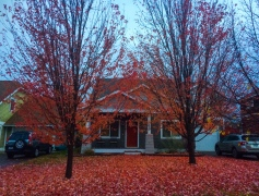 03 whitefish montana red tree