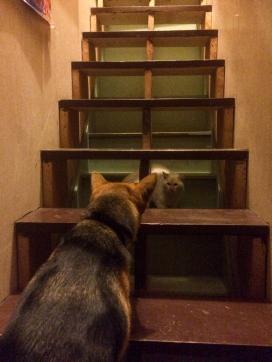 04 ollie + airbnb cat