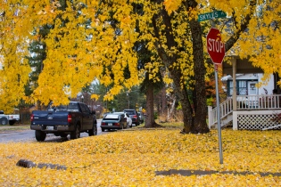 08 whitefish montana yellow leaves
