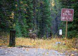 09 glacier national park deer