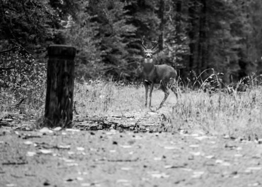 10 glacier national park deer