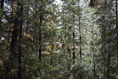 11 stillwater state forest whitefish montana