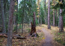 15 swift creek trail whitefish montana