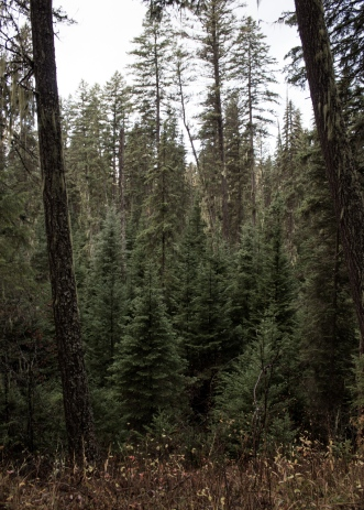 17 swift creek trail whitefish montana