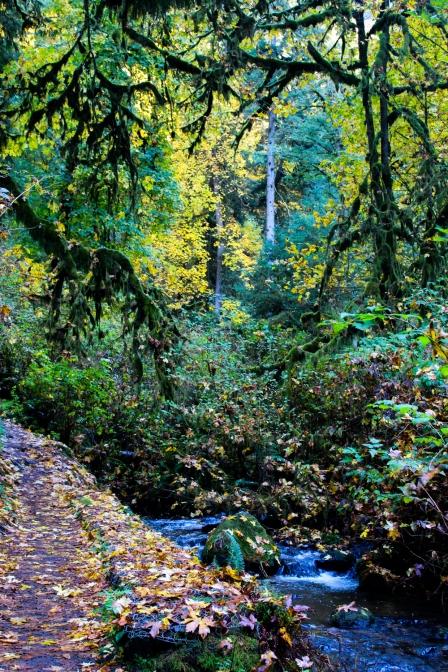 21 tillamook oregon waterfall hike