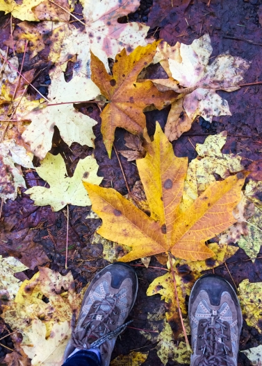 23 tillamook oregon waterfall hike big leaf