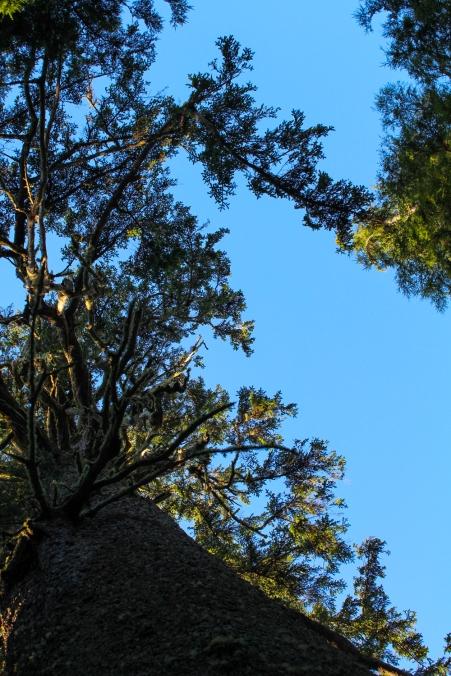 30 tillamook oregon cape meares lighthouse hike big spruce