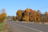56 autumn trees leaving oregon