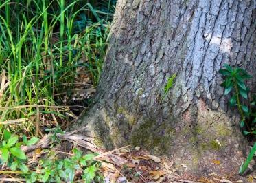 10 bayou coquille green lizard