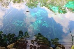 63 cenote carwas tulum