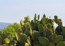 07 teotihuacan cactus + hummingbird