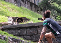 09 hot springs arkansas patrick groundhog pic