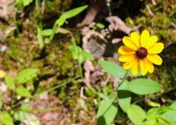 26 hot springs national park flower
