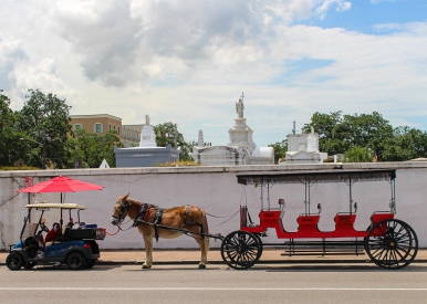 17 mule & carriage & st. louis cemetery #1 basin street new orleans