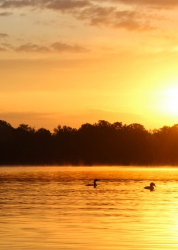 09 swede lake wisconsin loons orange sunrise