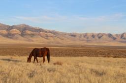 30 utah horse