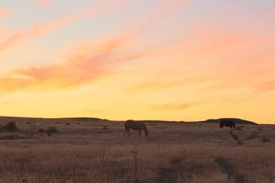 43 sunset horses utah