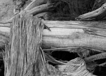 53 canyonlands utah wood b&w