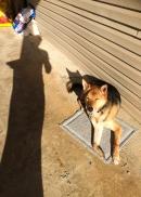 04 shadow ollie