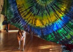 05 hippie ollie