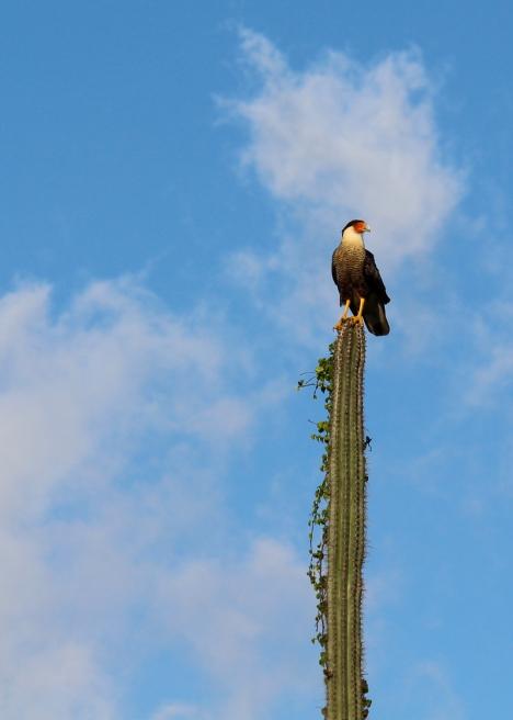 04 curaçao christofell mountain hike bird