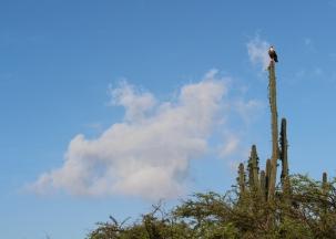 05 curaçao christofell mountain hike bird