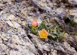 14 curaçao christofell mountain hike flowers