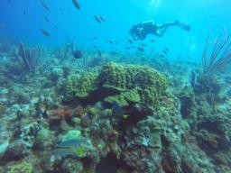 31 diving in curaçao