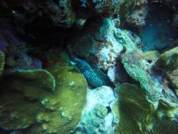 32 diving in curaçao