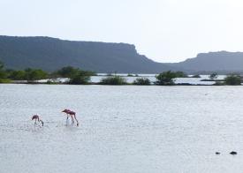 57 curaçao flamingos