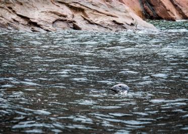 38 seal cabot trail cape breton nova scotia